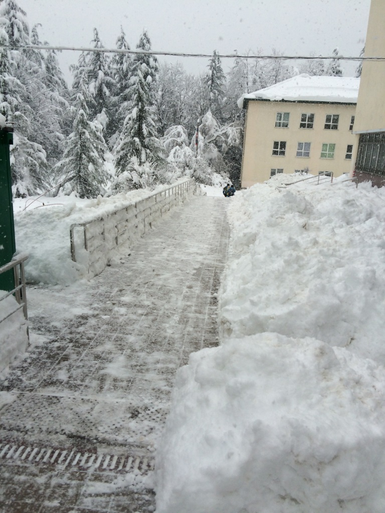 Уборка территории от снега цены